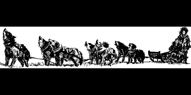 chiens-traineaux-4
