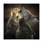 collin-bogle-wolf-trinity