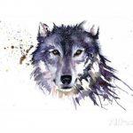 sarah-stokes-snow-wolf